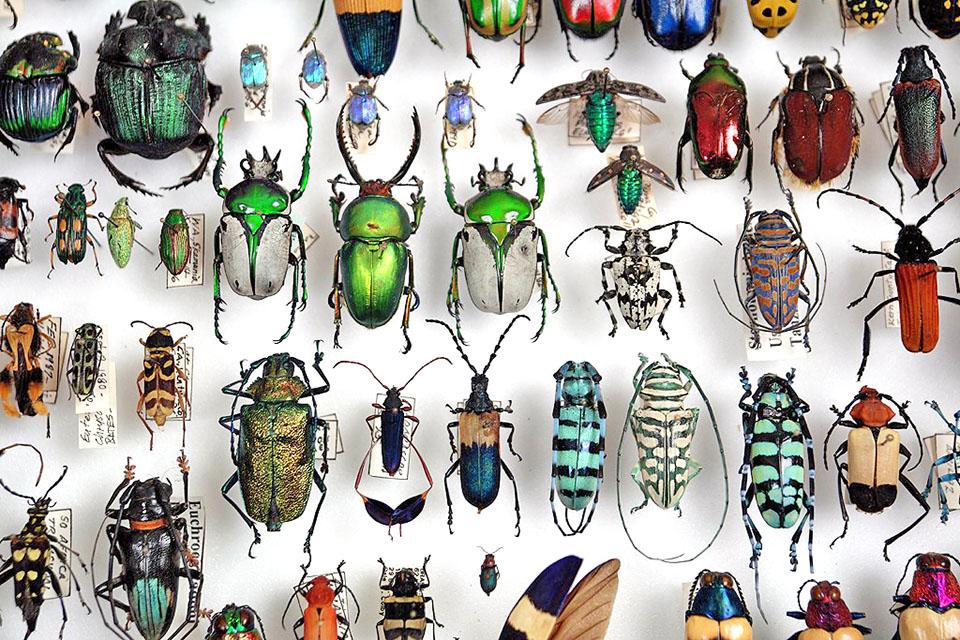 beetles_dsc6299