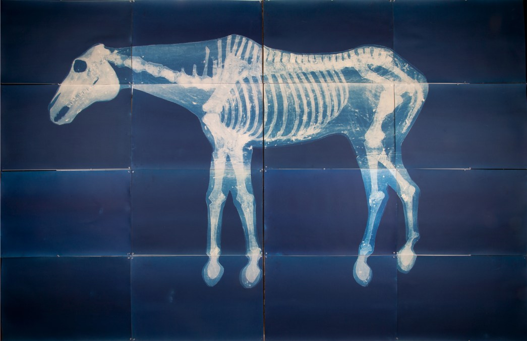 Cyanotypes by Carrie Witherell