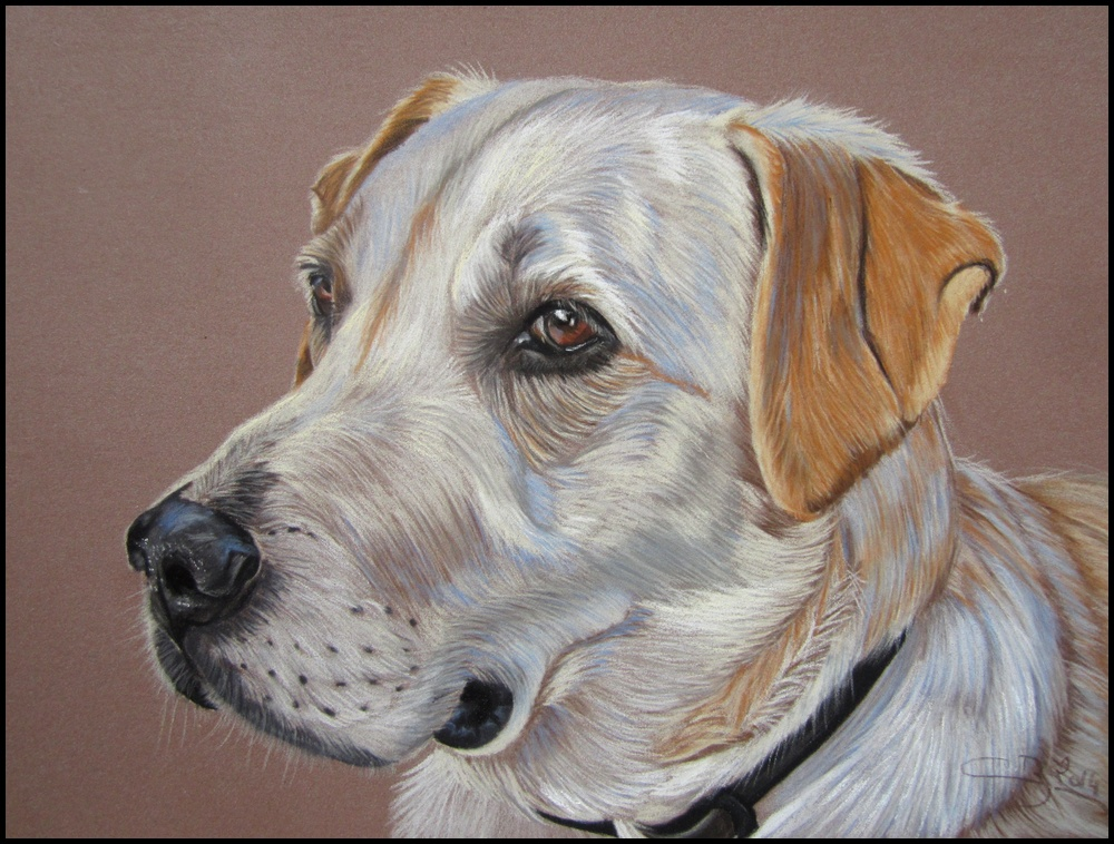 portrait labrador