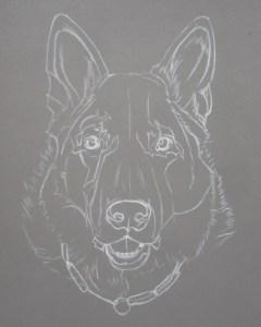 dessiner berger allemand