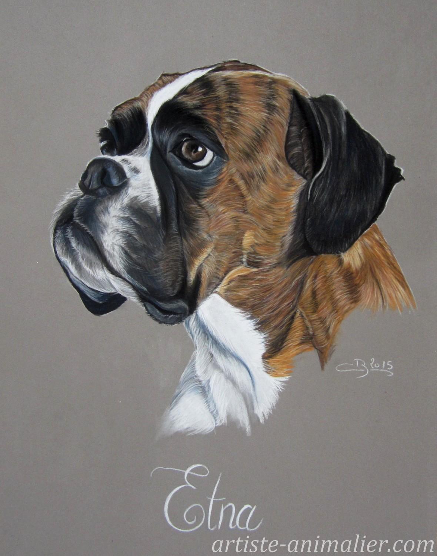 Portrait de boxer aux pastels - Dessin chien boxer ...