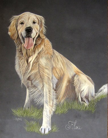 pastel golden retriever