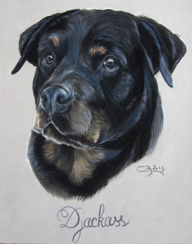 rottweiler-portrait
