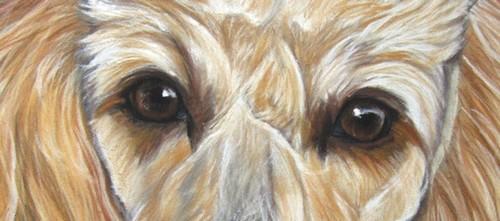 yeux chien pastel