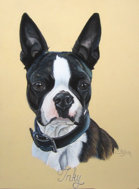 Portrait de Boston Terrier