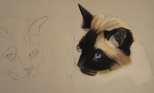 dessiner chat pastel sec