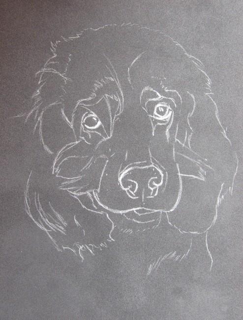 esquisse pastel chien
