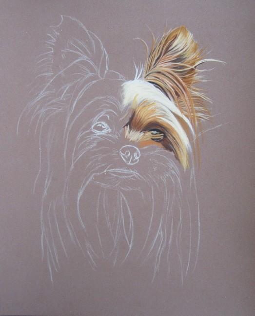 yorkshire terrier dessin