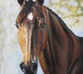 cheval pastel sec