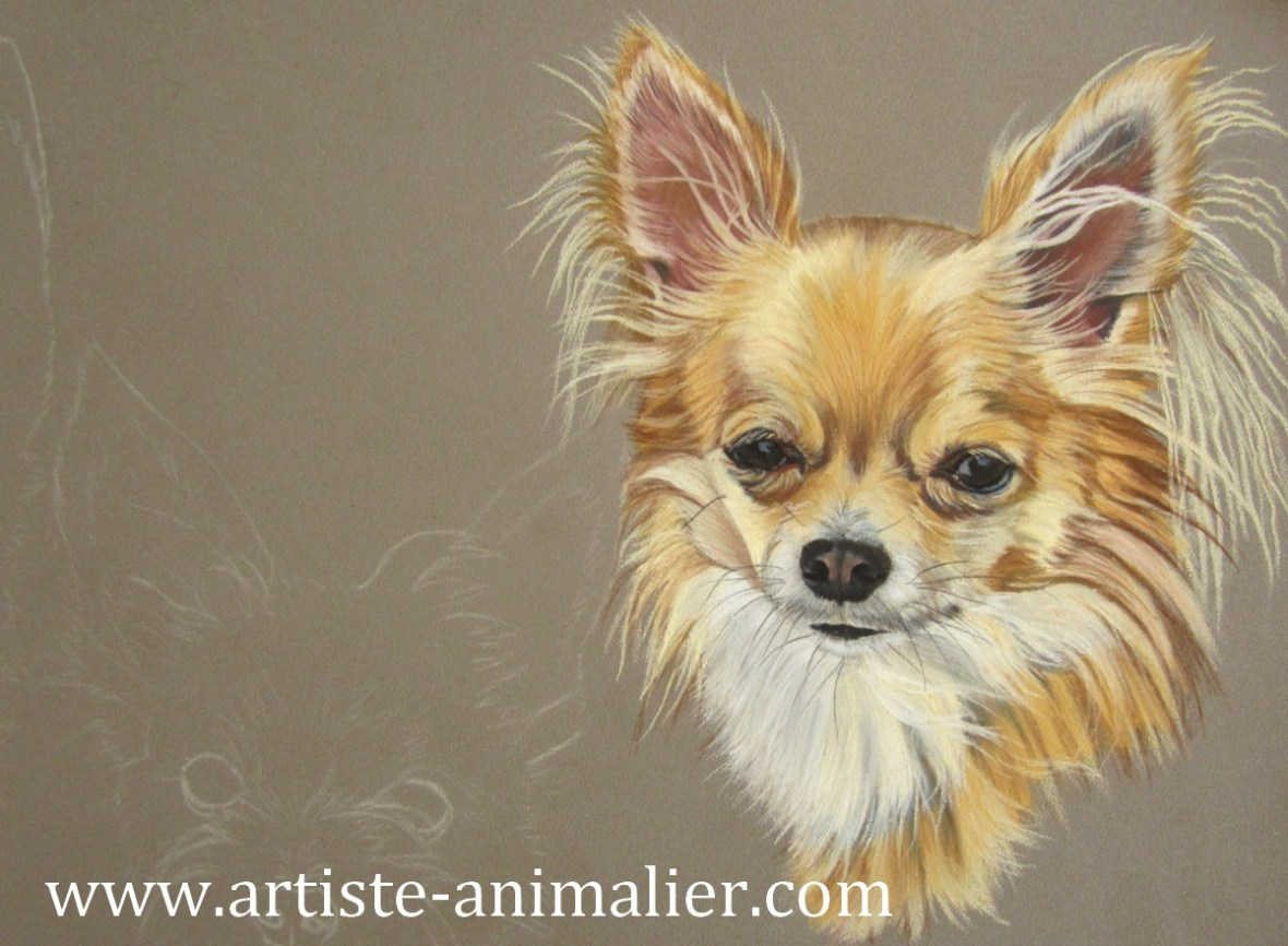 Chihuahua dessin