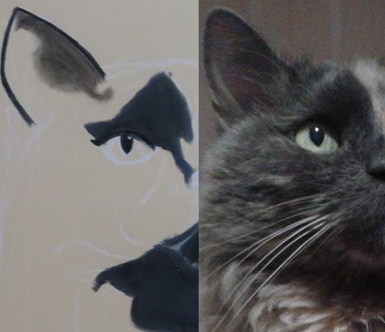kitty-comparaison