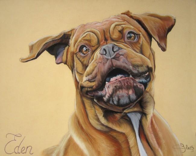 portrait dogue bordeaux