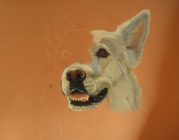 chien blanc pastel sec