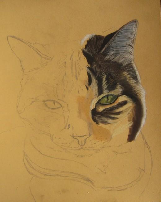 comment dessiner chat