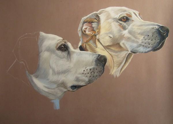 portrait pastel labrador