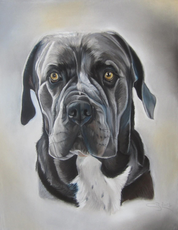 portrait cane corso