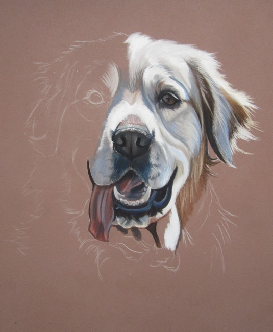 dessiner un golden retriever