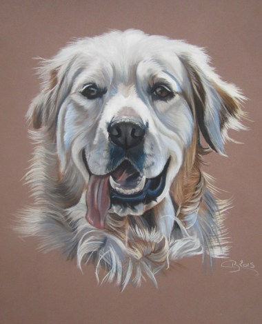 Portrait de Golden Retriever
