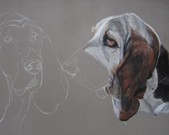 dessiner basset hound