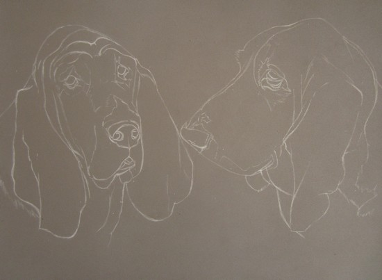 esquisse basset hound