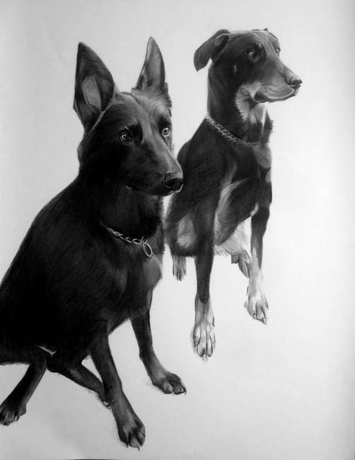 chiens fusain