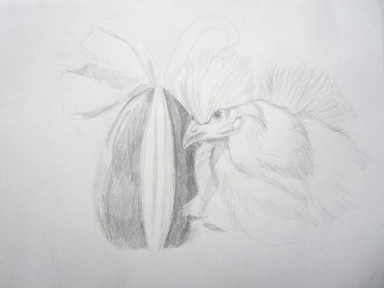 dessin poule
