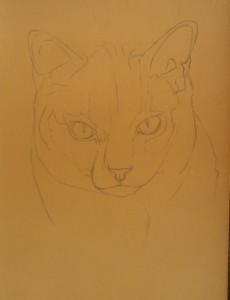 dessiner chartreux