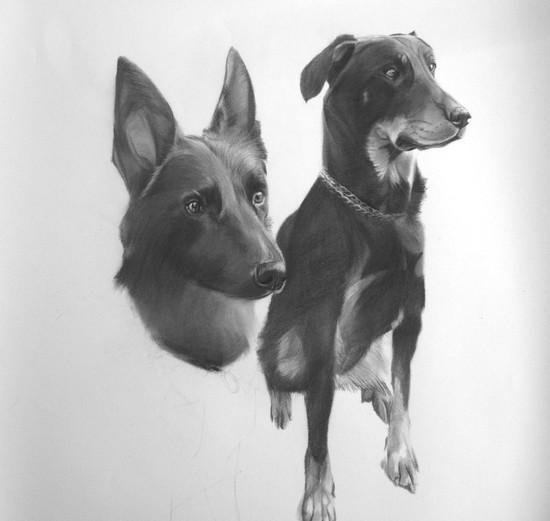 dessiner chiens