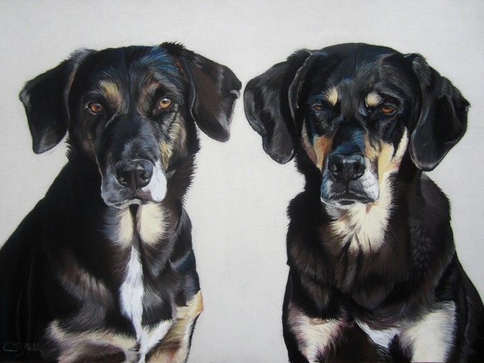 chiens portrait