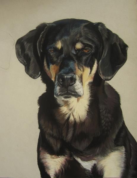 dessin chien pastel