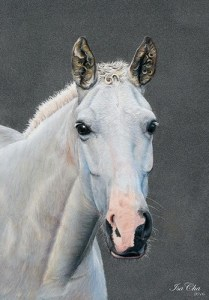 Le cheval d'Isa