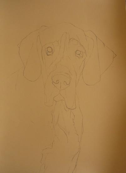 dessin dogue allemand