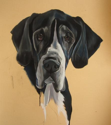 portrait dogue allemand