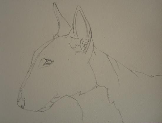 esquisse bull terrier