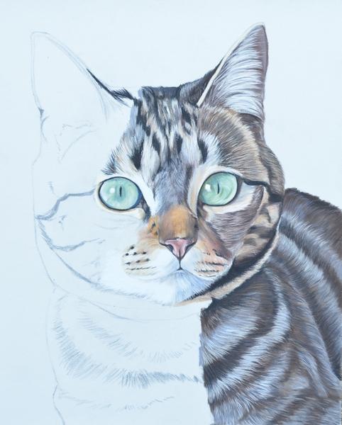 chat-tigre-pastel