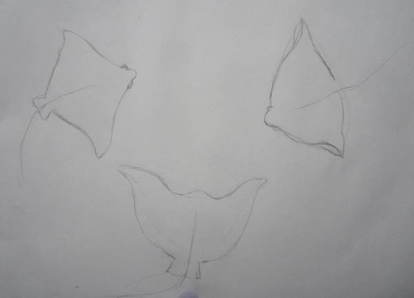 croquis-raies
