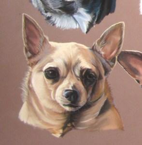 chihuahua-beige-pastel