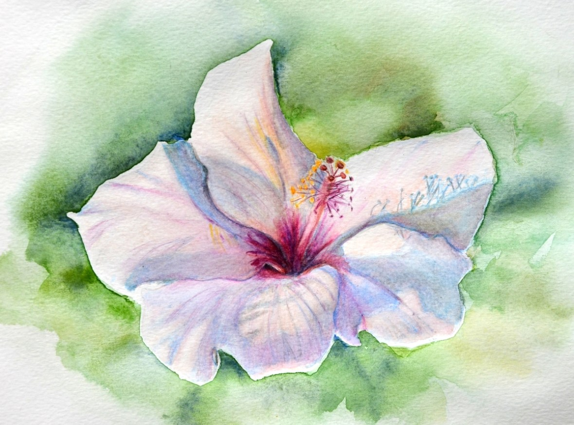 Peindre une fleur d 39 hibiscus aux crayons aquarellables - Dessin d hibiscus ...