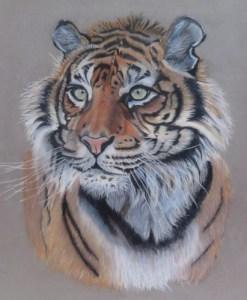 tigresse-patricia