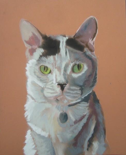 chat pas à pas pastel