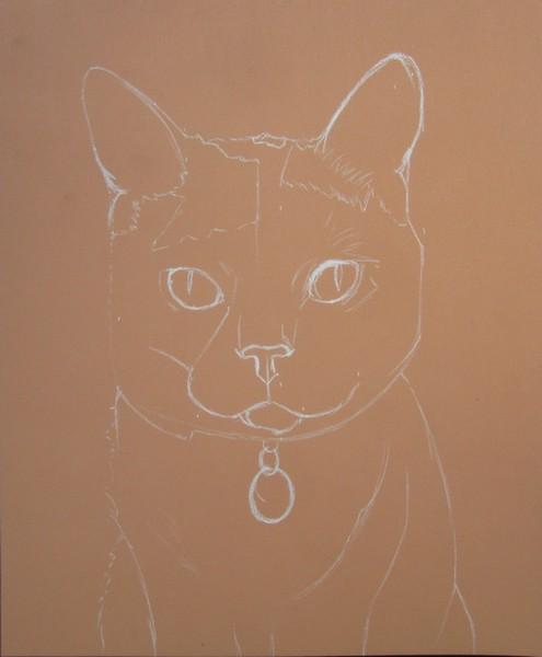 esquisse de chat