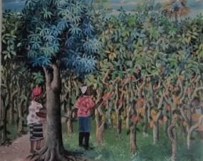 Récolte du cacao