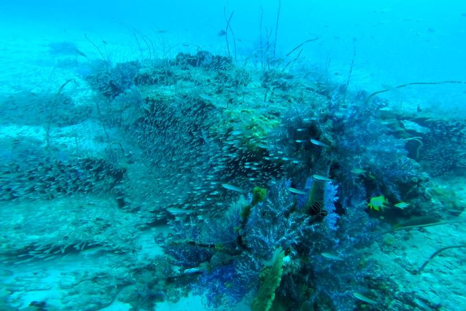 Similan Islands Coral