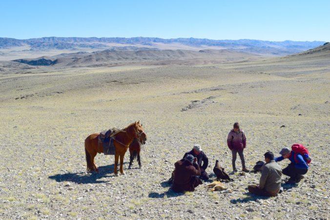 Caught Fox Eagle Hunting Mongolia