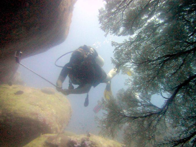 Coral Similan Islands