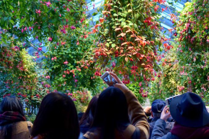Nabana No Sato - Hanging Flowers