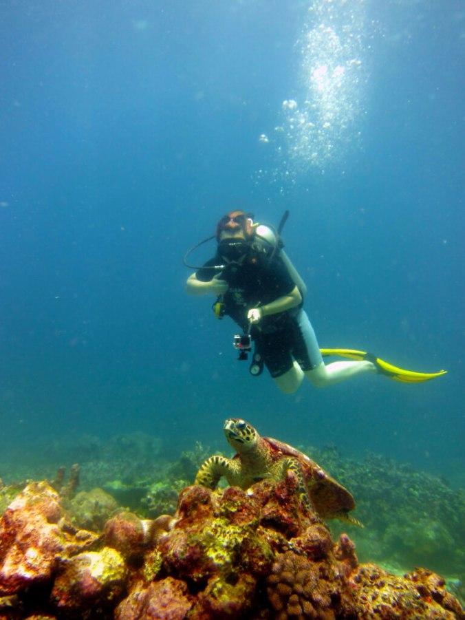 Sea Turtle Similan Islands