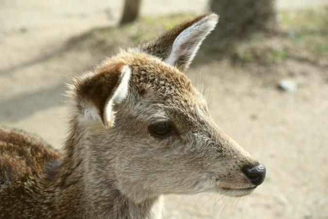 Daw! Baby Deer. <3