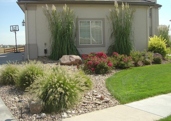 xeriscaping planting plants