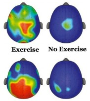 The Brain While Exercising 2